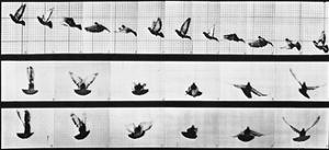 Muybridge Locomotion, Pigeon In Flight, 1881 by Science Source