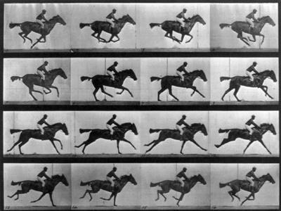 Muybridge Locomotion, Racehorse Galloping, 1887