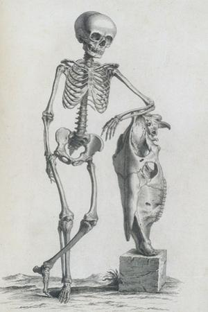 Osteographia, 1733