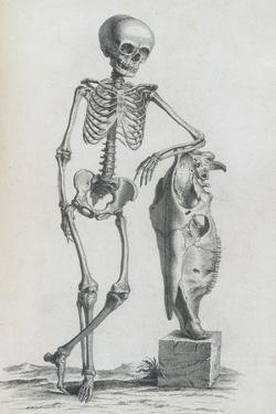 Osteographia, 1733 by Science Source
