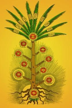 Tree of Life, Etz haChayim by Science Source