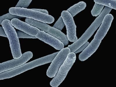Escherichia Coli Bacteria (Commonly known as E Coli) by Scientifica
