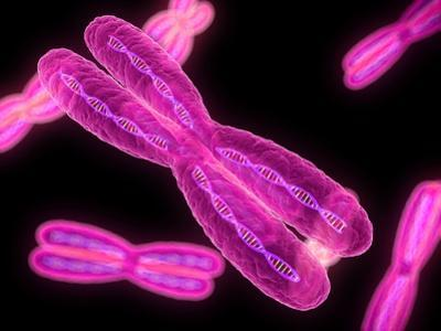 Chromosomes, Artwork by SCIEPRO