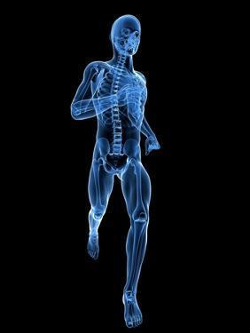 Running Skeleton, Artwork by SCIEPRO