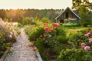 Road in the Beautiful Garden by scorpp