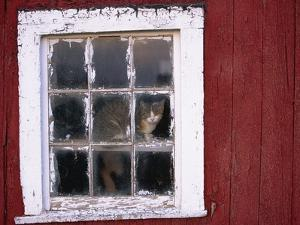 Cat sitting in a barn window by Scott Barrow