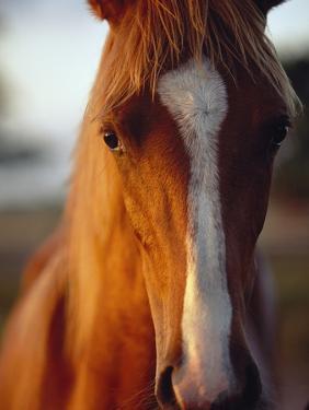 Horse by Scott Barrow