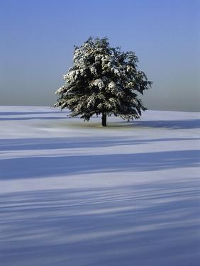 Tree in snow covered landscape by Scott Barrow