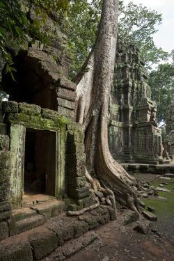 Tree Roots Encase a Ruin in Ta Prohm, a Temple Near Angkor Wat by Scott S. Warren