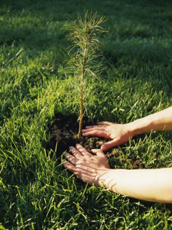 A Person Plants a Tree Seedling
