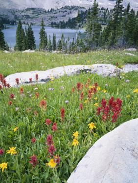 Boulders Amid Wildflowers, Ryder Lake, High Uintas Wilderness, Wasatch National Forest, Utah, USA by Scott T^ Smith