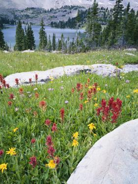 Boulders Amid Wildflowers, Ryder Lake, High Uintas Wilderness, Wasatch National Forest, Utah, USA by Scott T. Smith