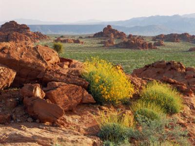 Brittlebush and Sandstone, Valley of Fire State Park, Nevada, USA by Scott T. Smith