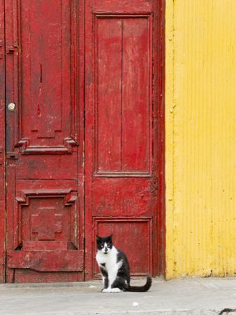 Cat and Colorful Doorway, Valparaiso, Chile by Scott T. Smith