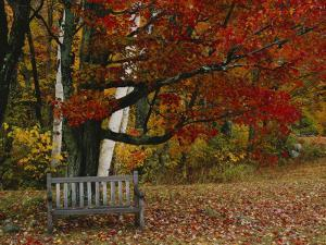 Empty Bench under Maple Tree, Twin Ponds Farm, West River Valley, Vermont, USA by Scott T^ Smith