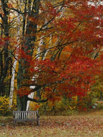 Empty Bench under Maple Tree, Twin Ponds Farm, West River Valley, Vermont, USA by Scott T. Smith