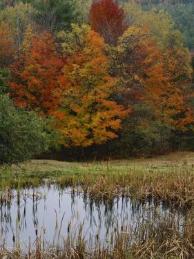 Forest and Pond in Autumn, North Landgrove, Vermont, USA by Scott T. Smith