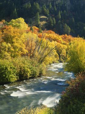 Maples and Birches Along Blacksmith Fork River, Wasatch-Cache National Forest, Utah, USA by Scott T. Smith