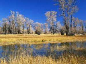 Reflections of Trees and Rushes in River, Bear River, Evanston, Wyoming, USA by Scott T. Smith