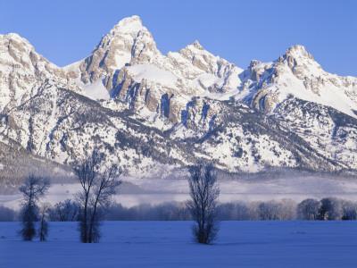 Snowcapped Mountains and Bare Tree, Grand Teton National Park, Wyoming, USA