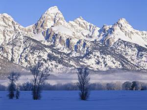 Snowcapped Mountains and Bare Tree, Grand Teton National Park, Wyoming, USA by Scott T^ Smith