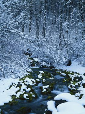 Spring-Fed Creek in Winter, Wasatch-Catch National Forest, Utah, USA by Scott T. Smith