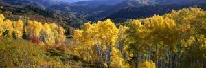 View Down Nebo Creek Drainage, Wasatch Mountains, Uinta National Forest, Utah, USA by Scott T. Smith