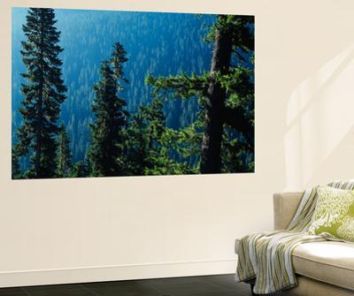 View of Mt Rainier National Park, Washington, USA by Scott T. Smith