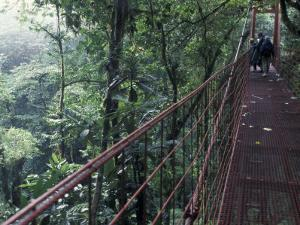 Visitors on Suspension Bridge Through Forest Canopy, Monteverde Cloud Forest, Costa Rica by Scott T. Smith