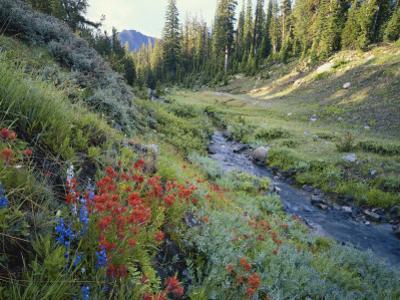 Wildflowers Along Chamberlain Creek, White Cloud Peaks, Sawtooth National Reservation Area, Idaho by Scott T. Smith