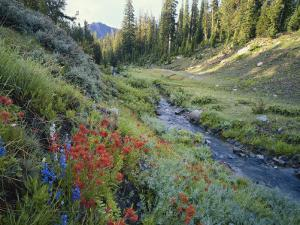 Wildflowers Along Chamberlain Creek, White Cloud Peaks, Sawtooth National Reservation Area, Idaho by Scott T. Smith