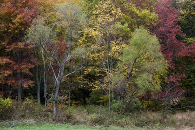 Autumn Colors on a Farm in Frederick County by Scott Warren