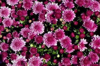 Flowers in the Outdoor Garden at Longwood Gardens by Scott Warren