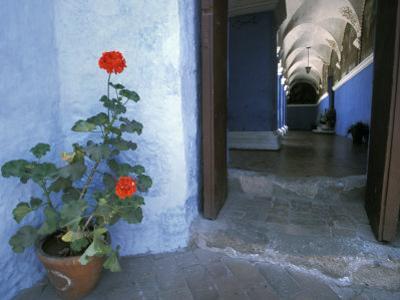 Potted Geranium at the Sprawling Santa Catalina Monastery by Scott Warren