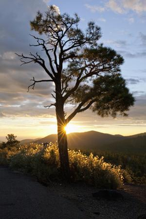 Sunrise in the Sunset Crater Volcano National Monument
