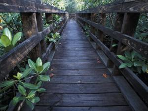 Walkway at a Nature Refuge on Vieques Island, Puerto Rico by Scott Warren