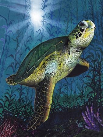 Turtle by Scott Westmoreland