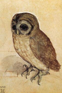 Screech Owl Albrecht Durer Plastic Sign