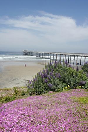 https://imgc.allpostersimages.com/img/posters/scripps-institution-of-oceanography-la-jolla-california-usa_u-L-PN70C70.jpg?p=0