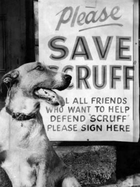 Scruff Beside a Placard Place Outside Home, Asking Friends to Add Signatures to the Petition