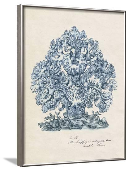 Sea Coral Study II--Framed Art Print