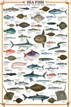 Sea Fish Educational Poster