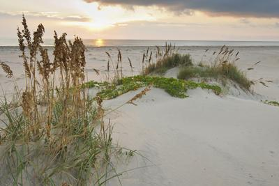 https://imgc.allpostersimages.com/img/posters/sea-oats-on-gulf-of-mexico-at-south-padre-island-texas-usa_u-L-PXR7O40.jpg?p=0