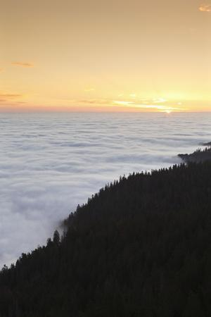 https://imgc.allpostersimages.com/img/posters/sea-of-fog-at-the-feldberg-at-sunrise-black-forest-baden-wurttemberg-germany_u-L-Q1EY62A0.jpg?artPerspective=n