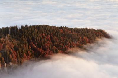 https://imgc.allpostersimages.com/img/posters/sea-of-fog-at-the-feldberg-at-sunrise-black-forest-baden-wurttemberg-germany_u-L-Q1EY9PT0.jpg?artPerspective=n