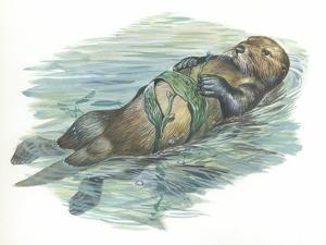 Sea Otter Enhydra Lutris Sleeping in Water