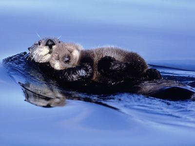 https://imgc.allpostersimages.com/img/posters/sea-otter-with-offspring_u-L-Q10V1QU0.jpg?p=0