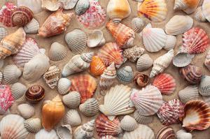Sea Shells on Sandy Beach