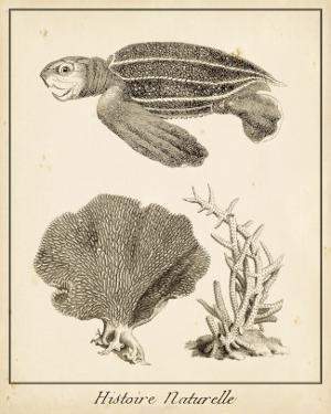 Sea Turtle Study II