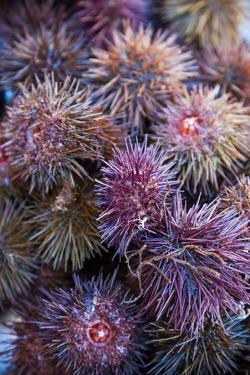 Sea Urchins for sale, Cadiz, Andalusia, Spain